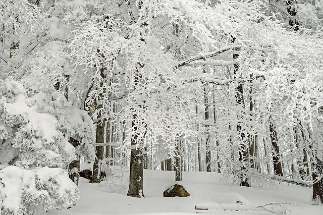 che rumore fa la neve